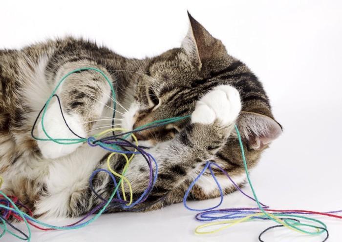 糸で遊ぶ猫