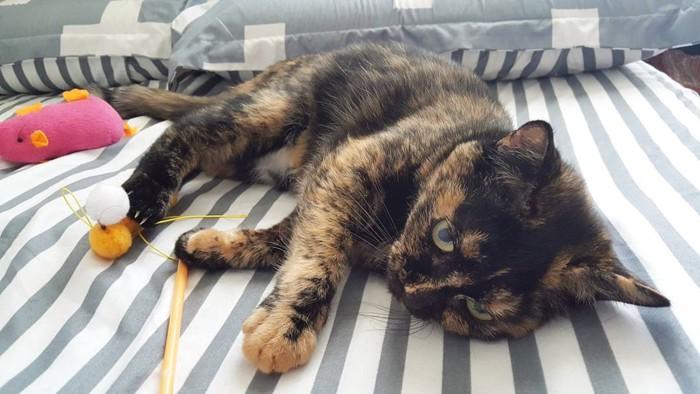 ベッドで寝転ぶ猫