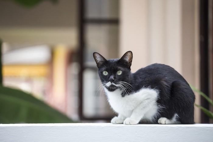 白ひげのような模様の猫