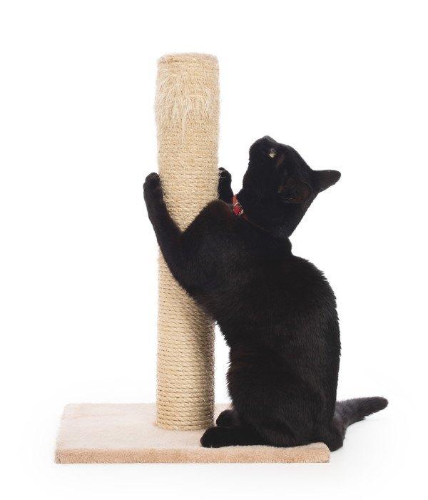 麻縄の爪とぎで爪をとぐ黒猫