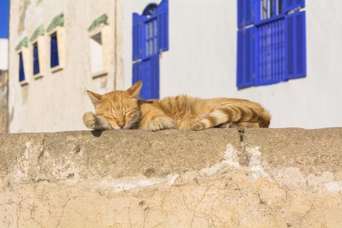 旅猫イメージ