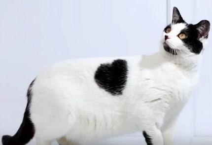 珍しい柄猫15