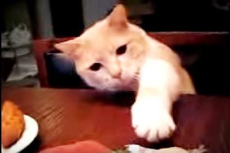 精一杯足を伸ばす猫