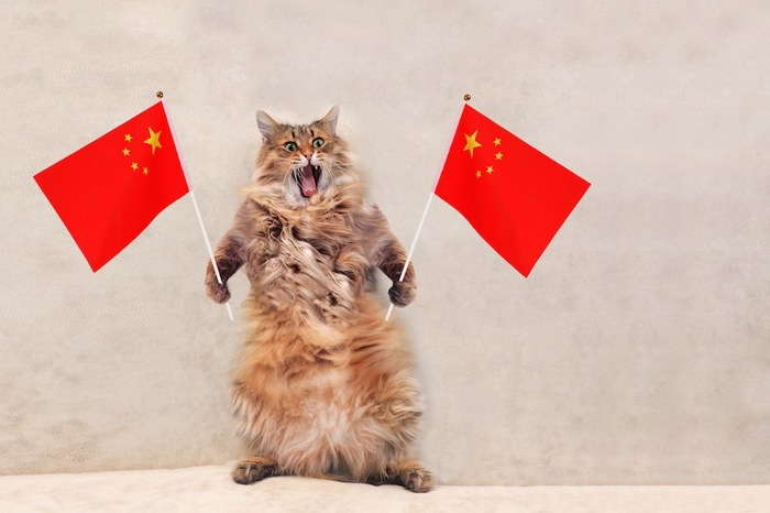 中国の国旗を両手に持つ猫