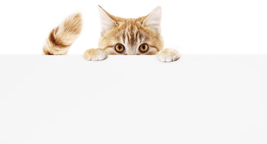 しっぽと顔を覗かせている猫