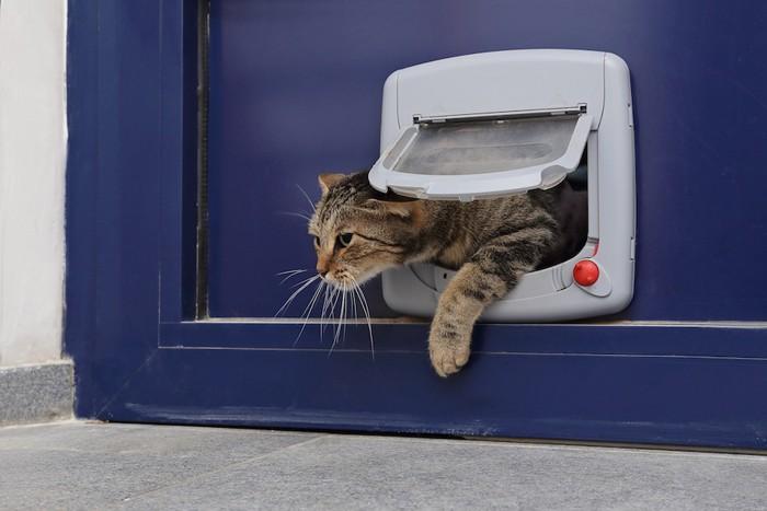 キャットドアから出てくるキジトラ