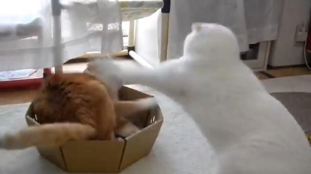 ケンカする猫達