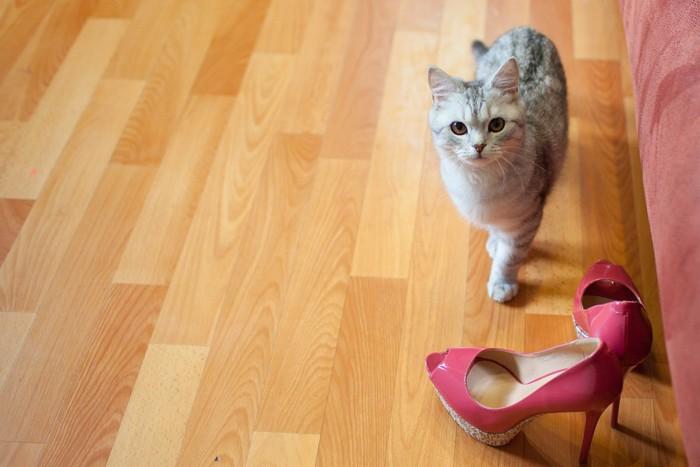 ハイヒールと猫