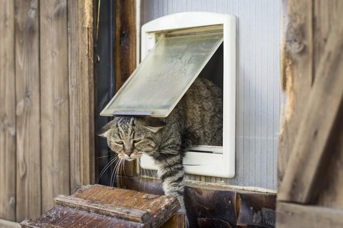 キャットドアから外にでる猫
