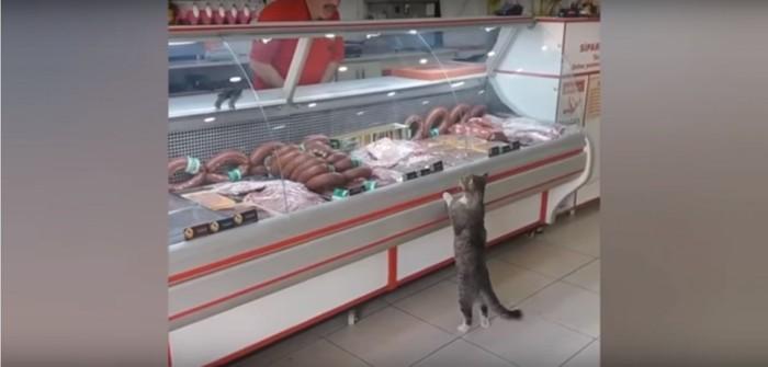 お肉屋さんの猫