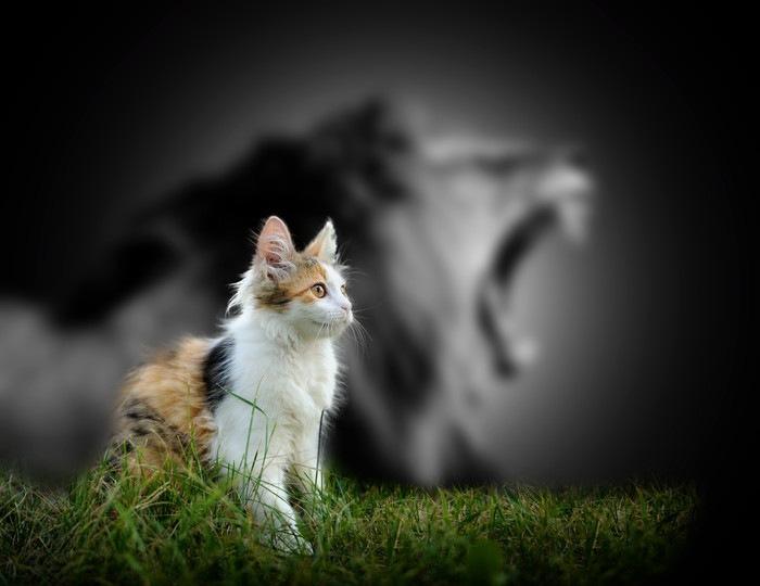 ライオンの影の前にいる猫