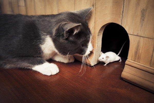 壁に穴があいた所からネズミを見る黒猫