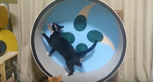 前に進みすぎな黒猫