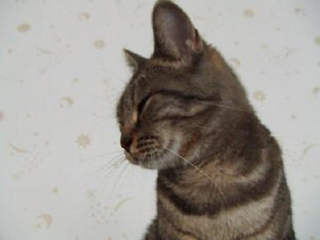 下向き気味のネコ