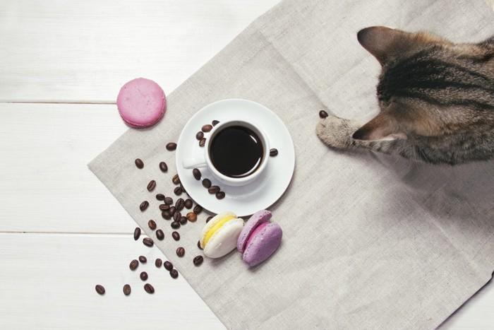コーヒー豆で遊ぶ猫