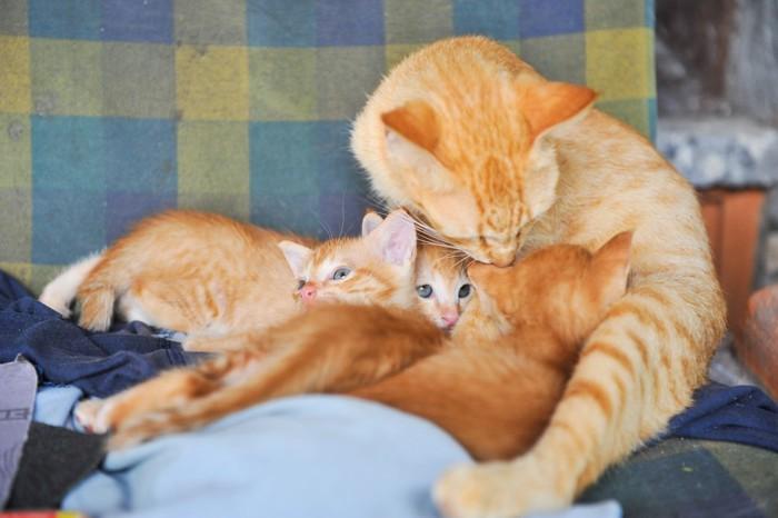 茶色い猫の親子