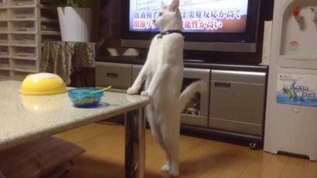 テーブルに前脚をかけて立つ猫