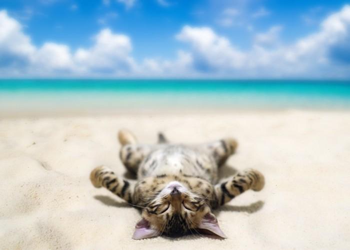 ビーチに居る猫