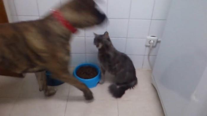 猫パンチする猫