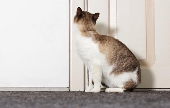 ドアの前で見上げている猫の後ろ姿