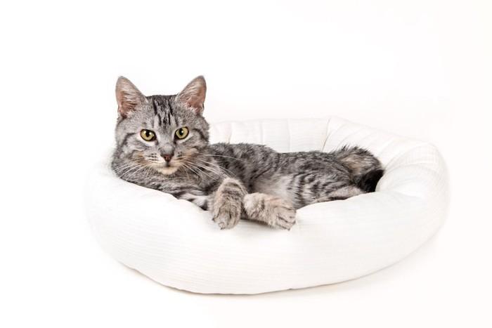 白いベッドでくつろぐ猫