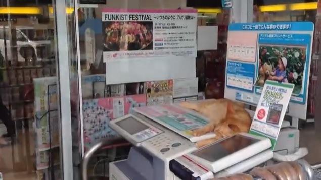 コピー機の上に乗る猫