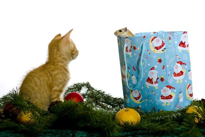 ハムスターと猫