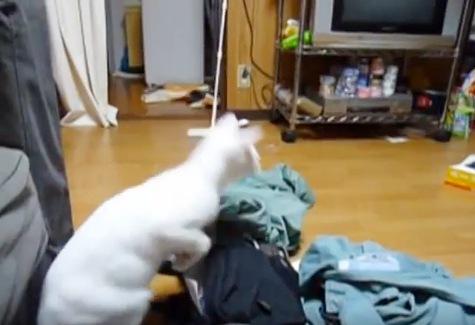 前足を下ろさずにジャンプの反動をつける猫