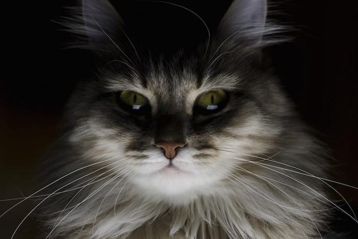 暗闇の中でこちらを見つめる猫