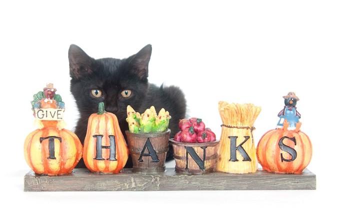 THANKSと書かれた置物と黒猫