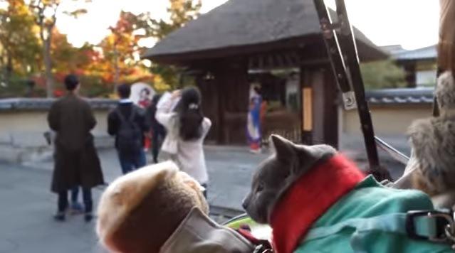 2匹の猫(奥に舞妓さん)