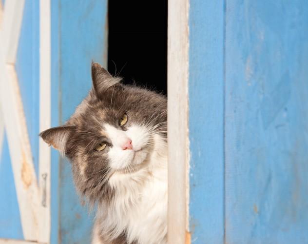 首をかしげる長毛猫