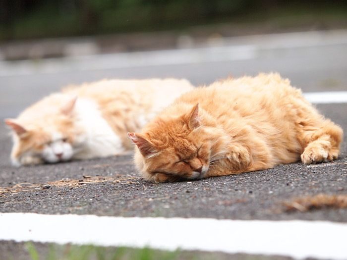 外で昼寝する二匹の猫