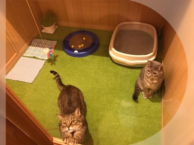 アップデート写真3 キャッツカートン個室