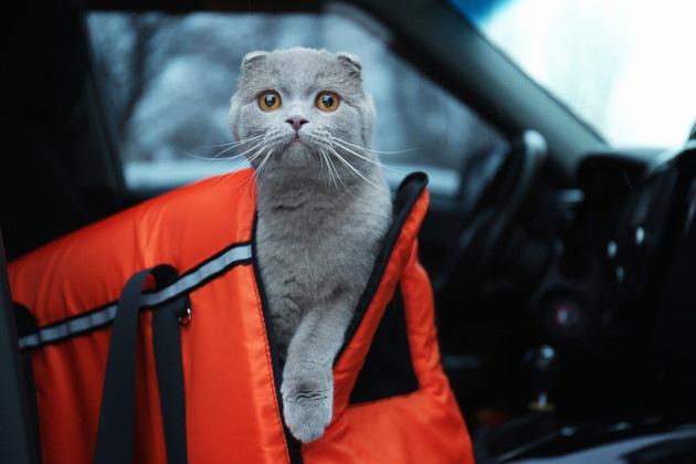 #キャリーバックと猫#