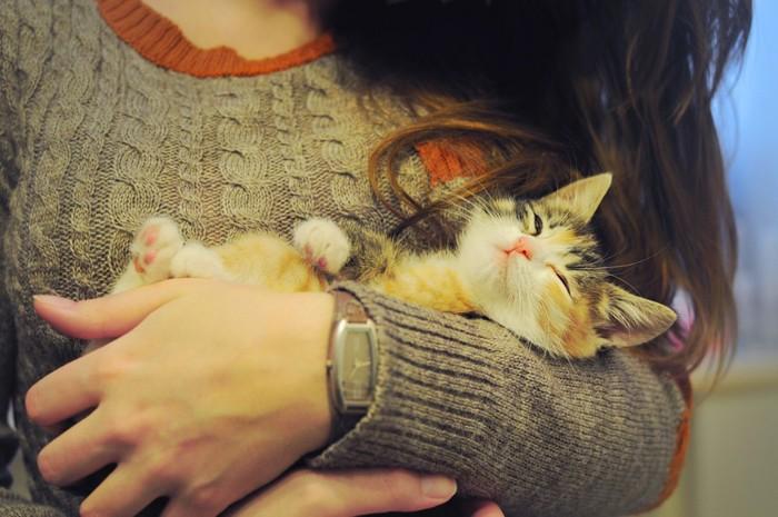 131077917抱かれている子猫