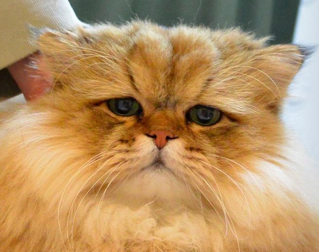 しょんぼり猫2