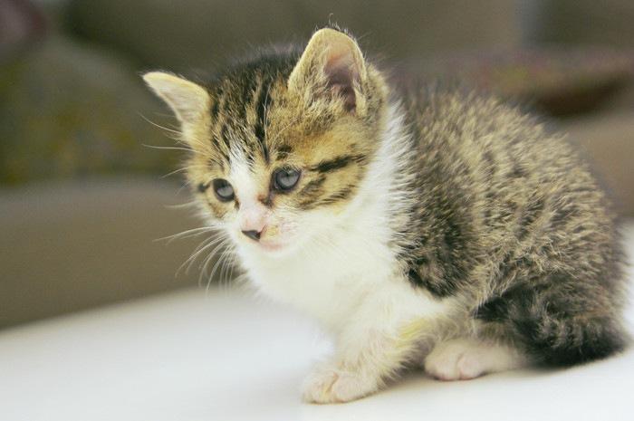 一匹の子猫