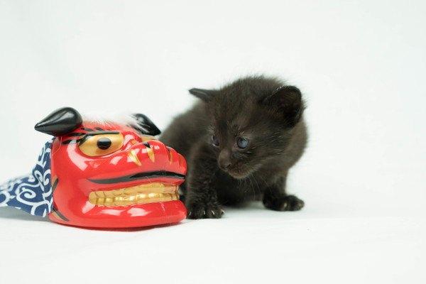 獅子舞と黒猫