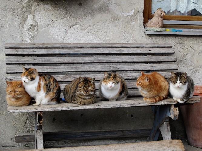 屋外のベンチでくつろぐ猫たち