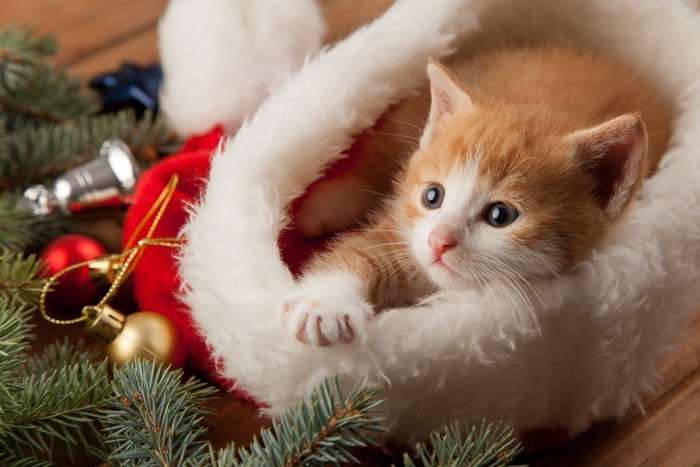 クリスマスの飾りと子猫