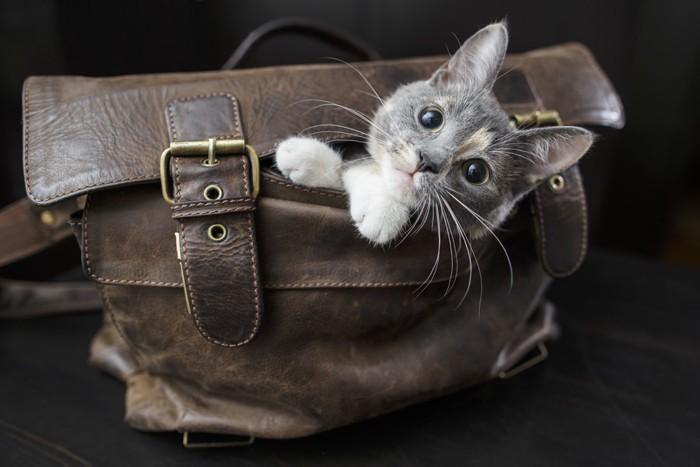 鞄から顔をのぞかせる猫
