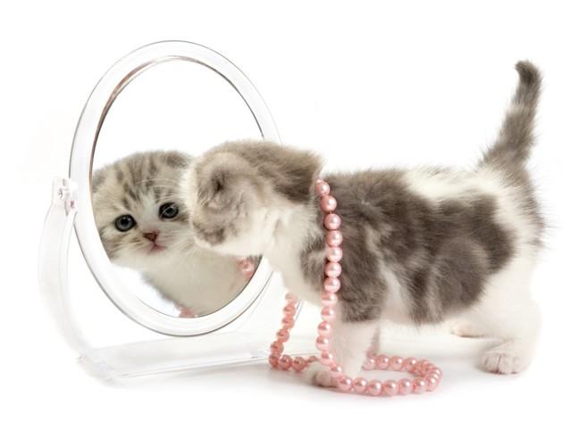 猫宝石イメージ