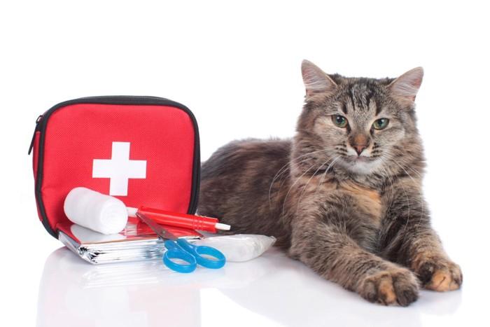 救急キットと猫