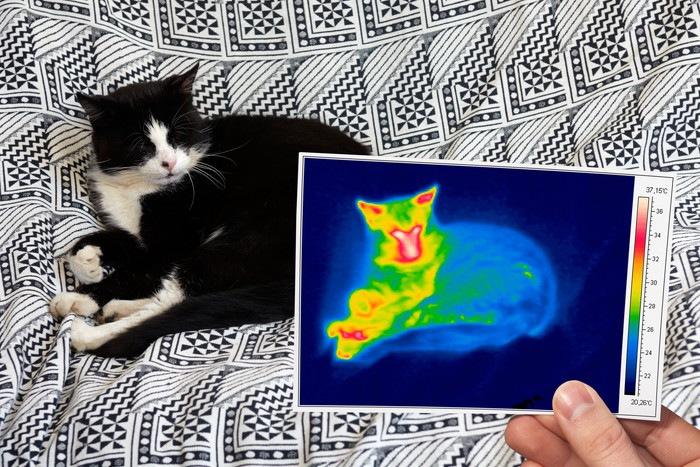 猫とサーモグラフィ