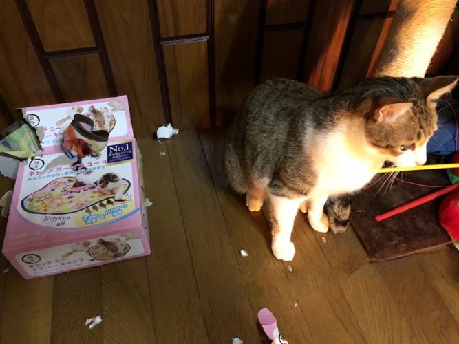 猫とボロボロになったおもちゃの箱