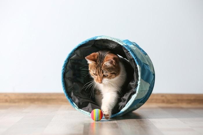 トンネルから出てボールに触る猫