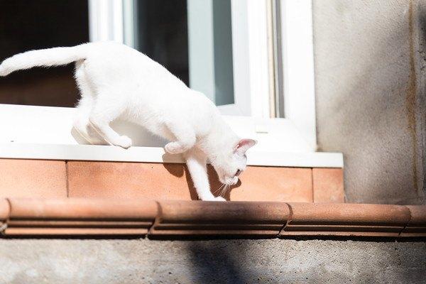 外に出てる白猫