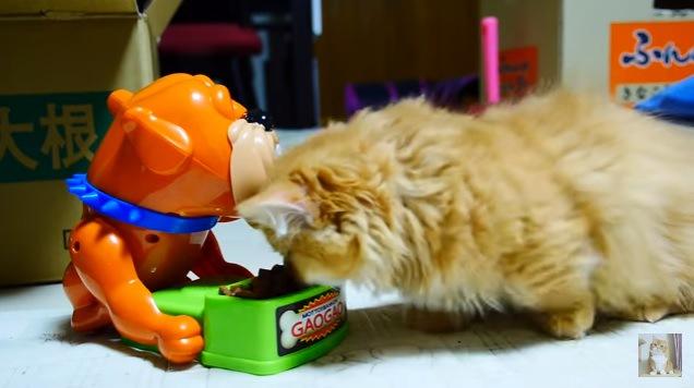 フードを食べようとする猫(横向き)