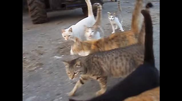 左方向へとUターンする猫達